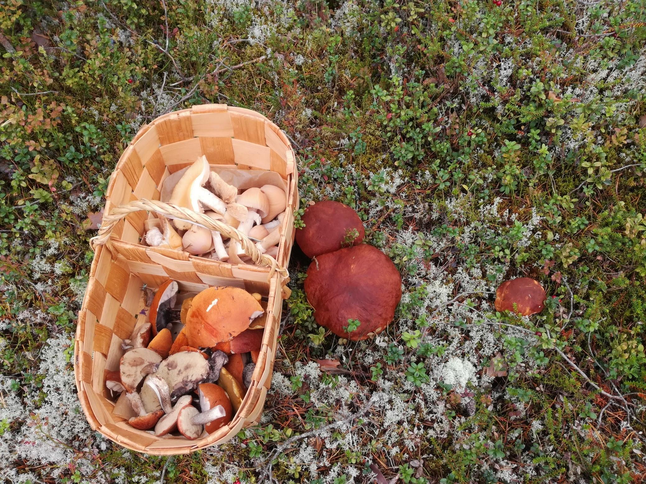 Villiyrttikurssit ja sienikurssit